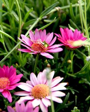 rose Kettenanhänger grün Maria liegend von der Seite