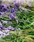 Anhänger mit Kette Sissi silber lila seitlich