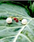 Ohrhänger Catalina gold pink Perle gekreuzt